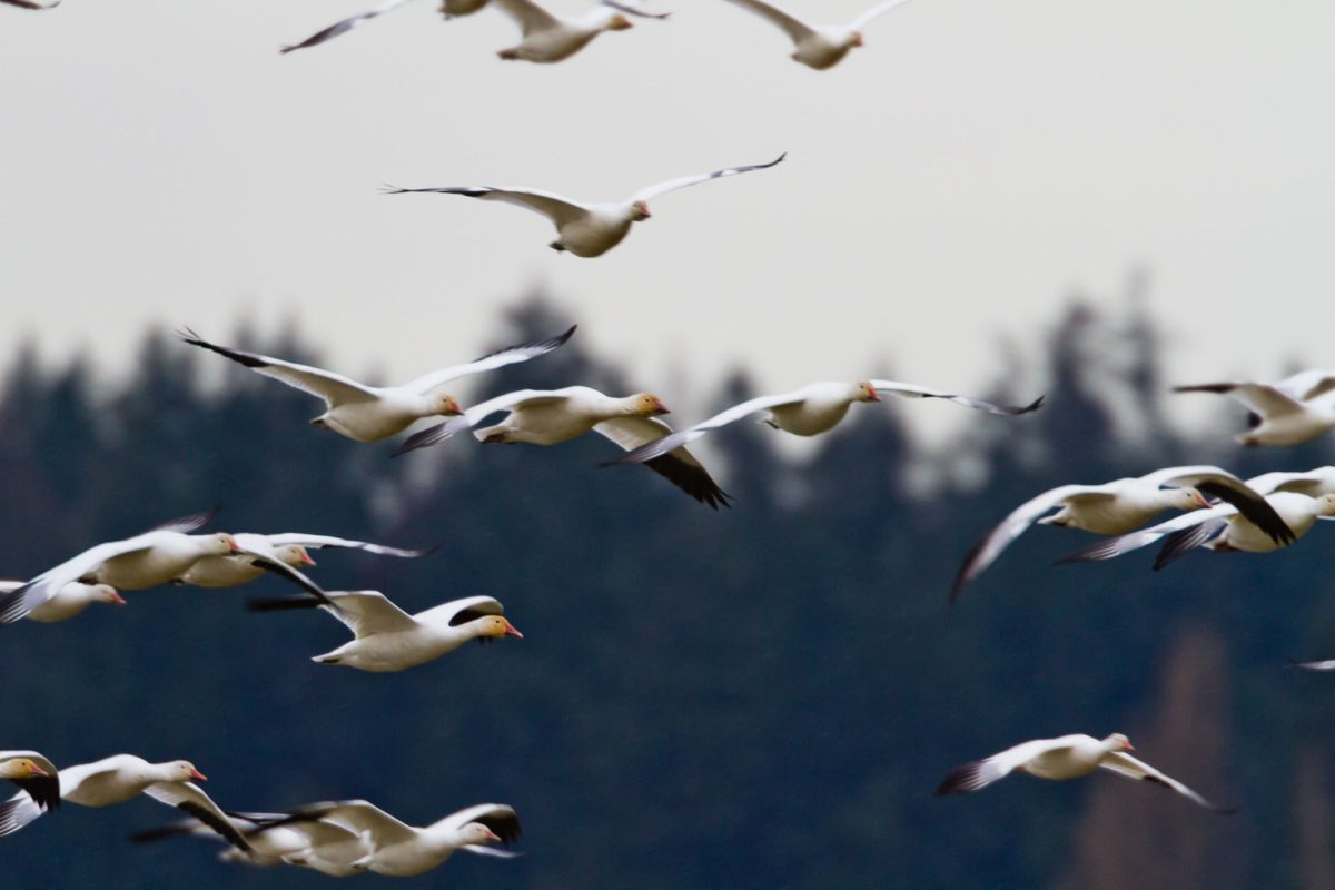 winder birds